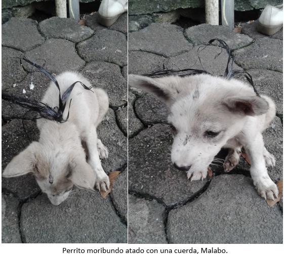 Perrito moribundo atado con una cuerda, Malabo