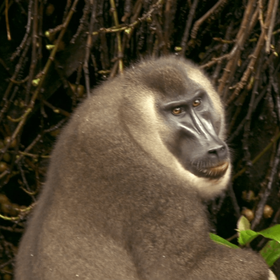 Los 'secretos' naturales de Guinea Ecuatorial